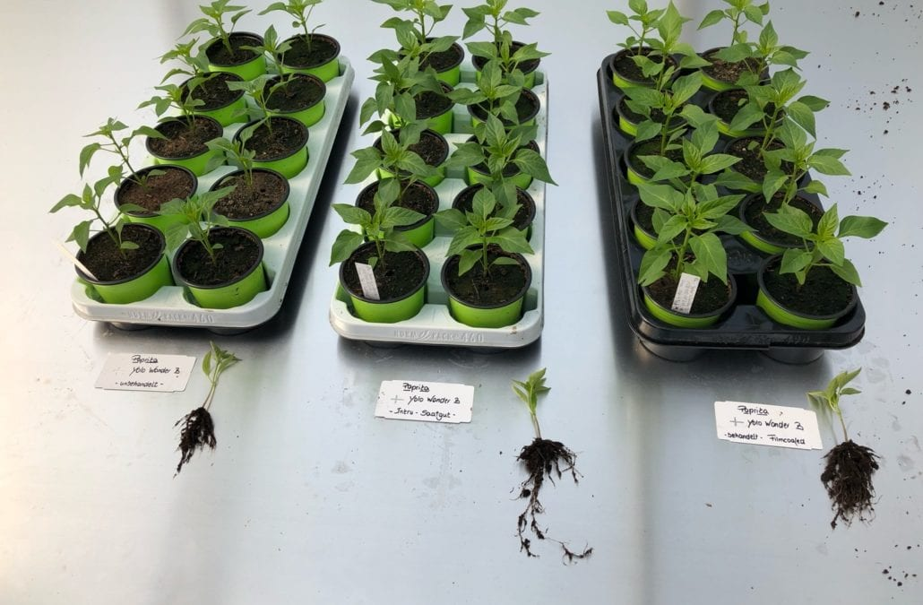 Convincing test results for FREYA Capsicum
